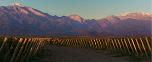 Vineyards in Mendoza Argentina